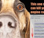 Kill-your-search-engine-ranking