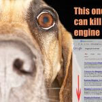 This one mistake will kill your search engine results.